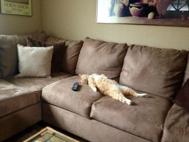 kot na kanapie