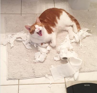 kot rozszarpał rolkę papieru