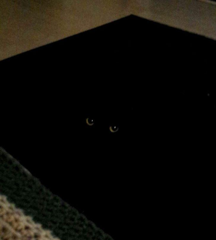 bardzo czarny kot