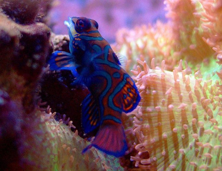 kolorowa rybka