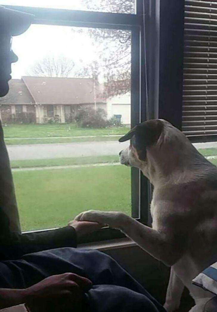 pies trzyma za rękę