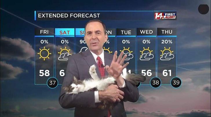kot w telewizji