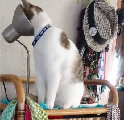 kot z głowa w lampie
