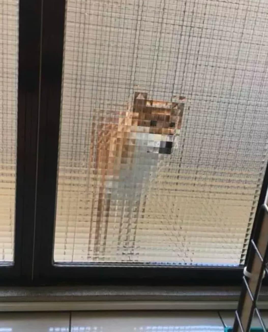 pies za drzwiami