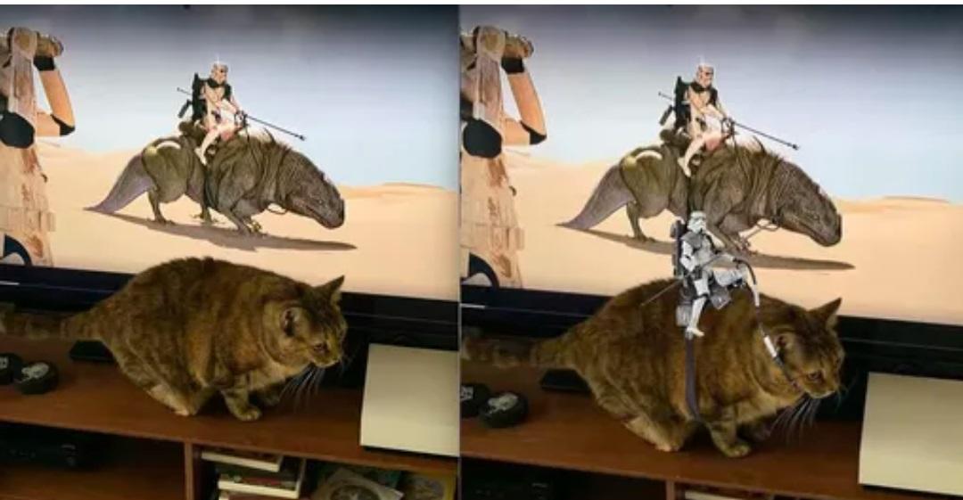kot przy tv
