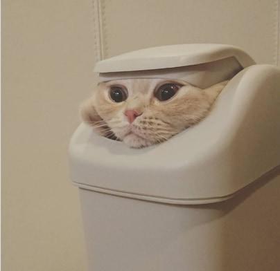 kot w koszu
