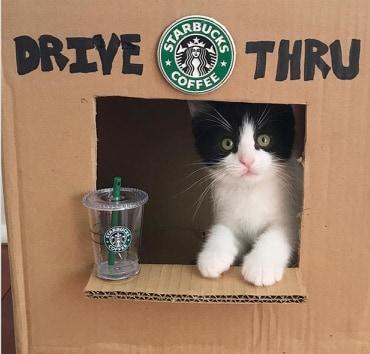kotek sprzedaje kawe