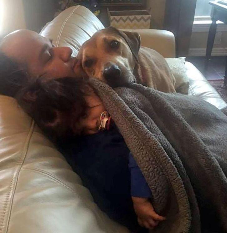pies się przytula