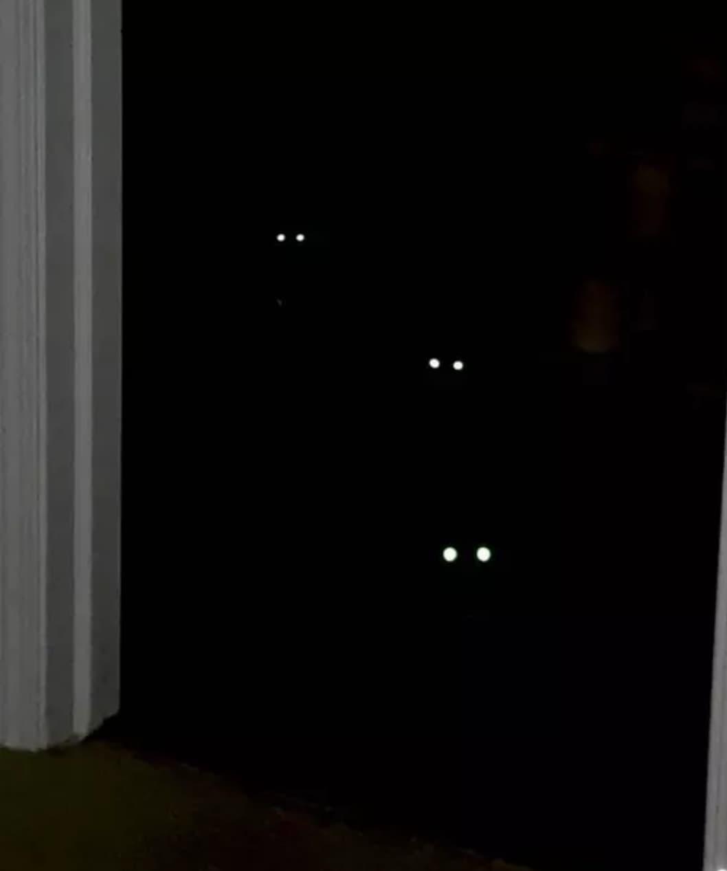 czarne koty w ciemności