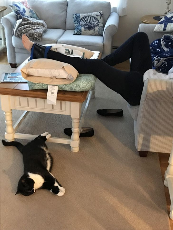 kot leży