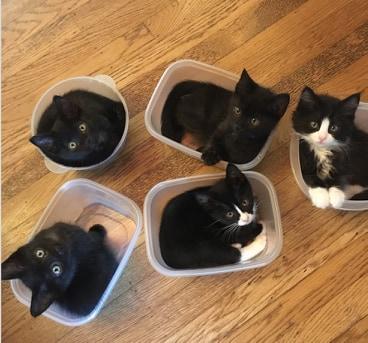 kotki w pudełkach
