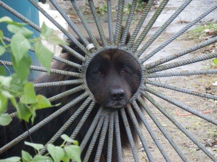 pies w bramie