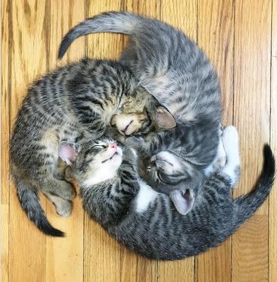 trzy kotki śpią