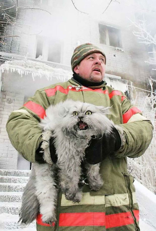 kot ze strażakiem