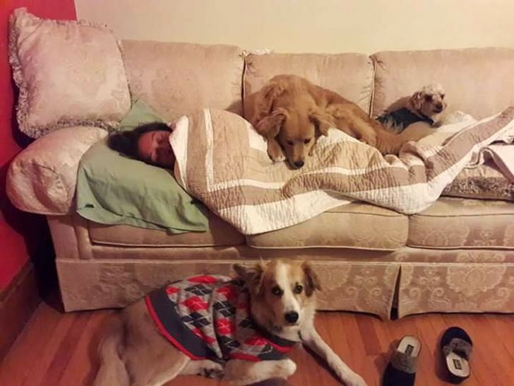 psy pilnują właścicielki