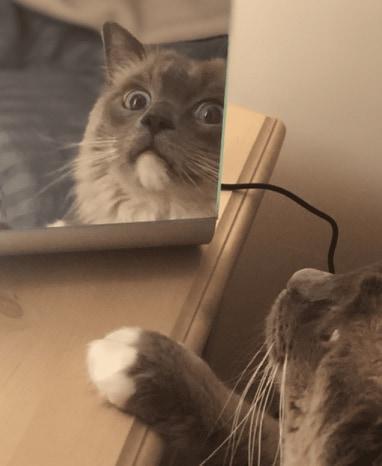 kot w lusterku