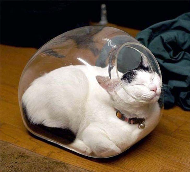 kot w misce