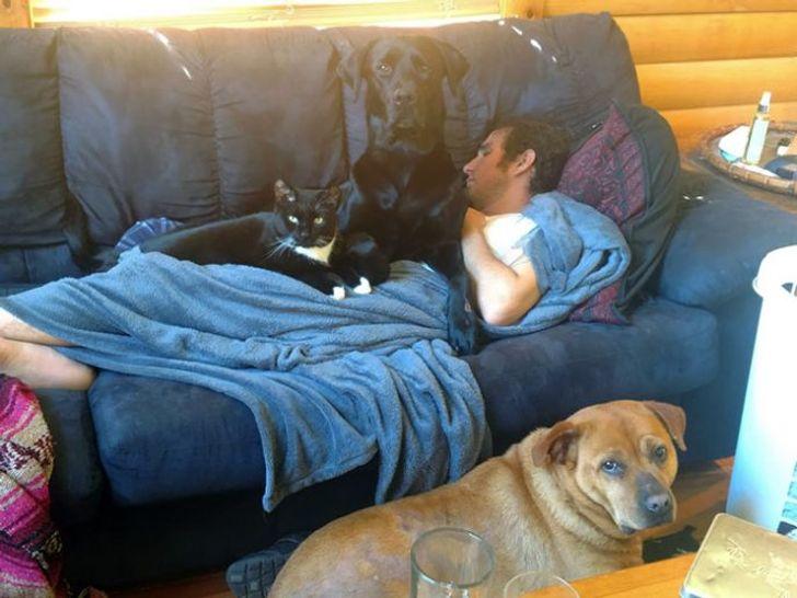 psy pilnują człowieka