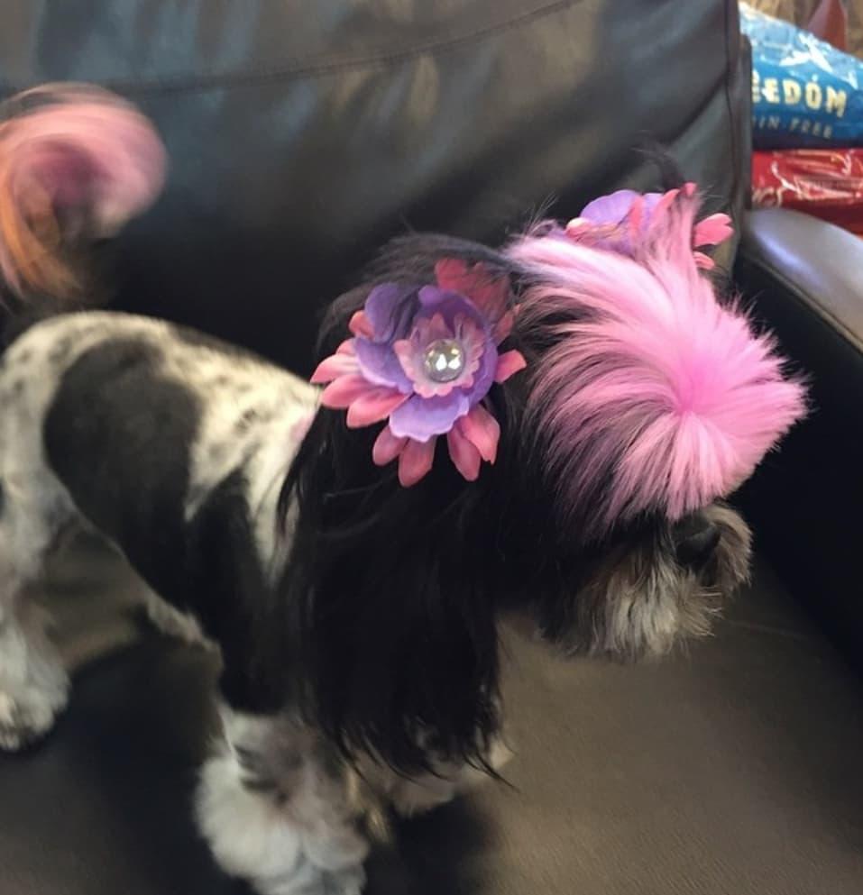 pies z różową grzywką