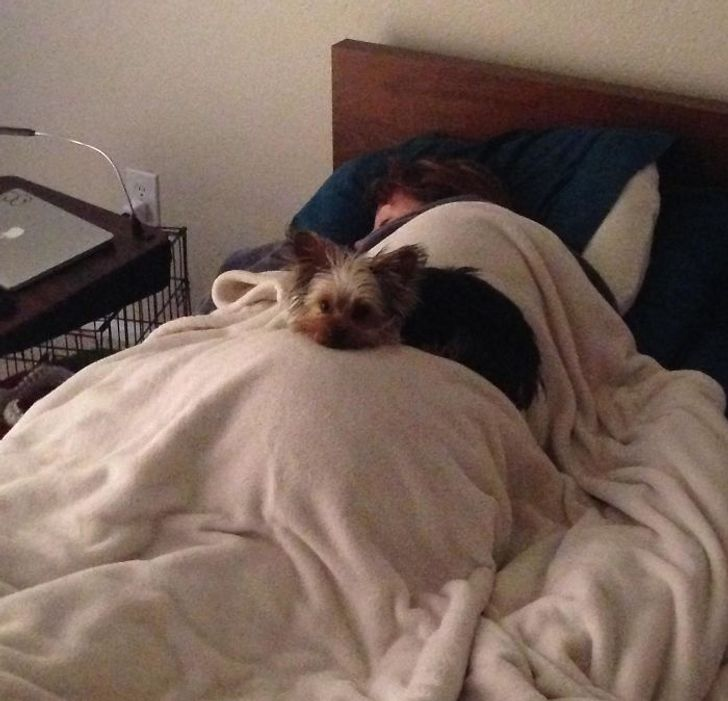 pies śpi na człowieku