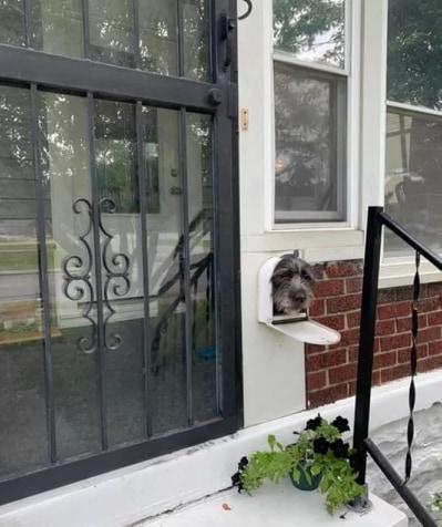 pies z wystająca głową