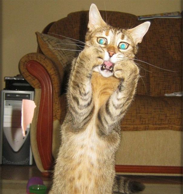 przestraszony kot