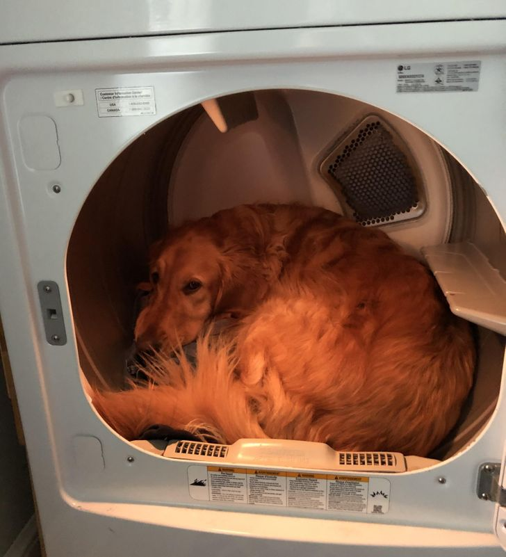 pies w pralce