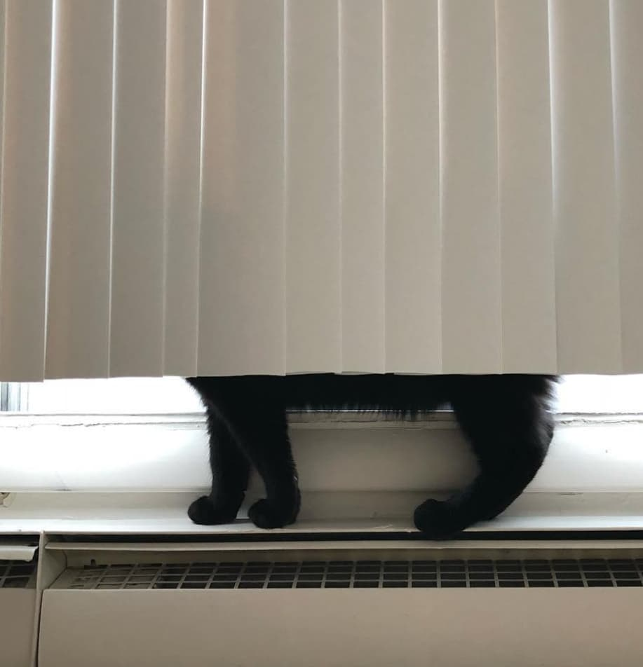 kot za żaluzją