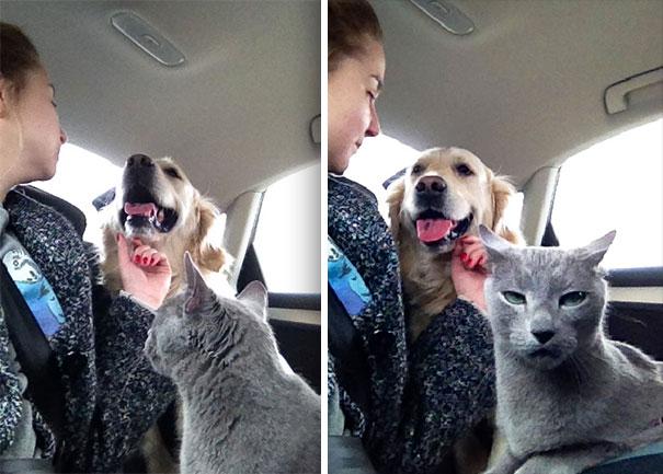 podróż ze zwierzętami