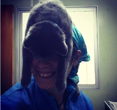 kot na głowie