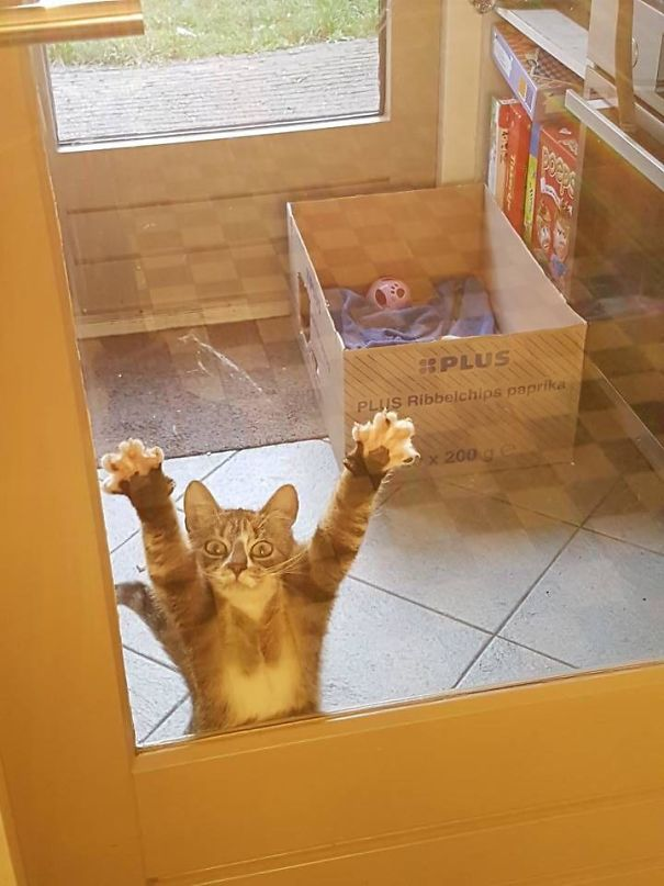 kot w drzwiach