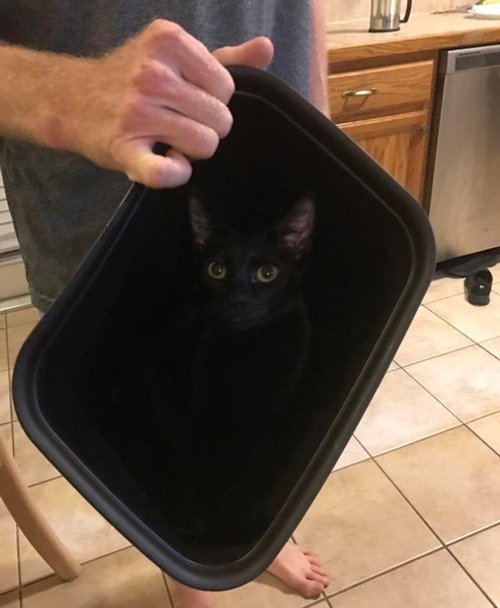 kot w koszu na śmieci