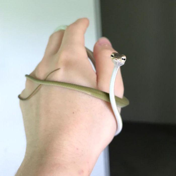 mały wąż