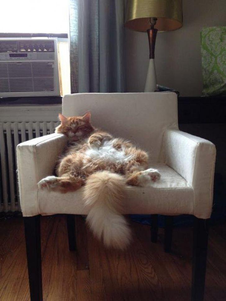 kot na fotelu