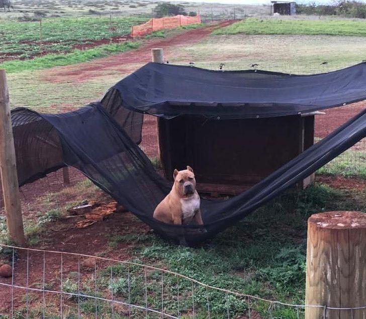 pies w kojcu