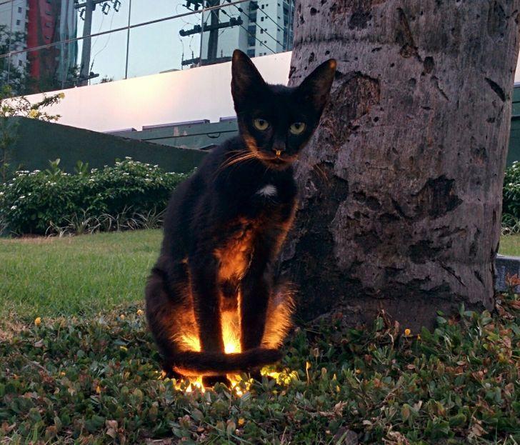 podświetlony kot