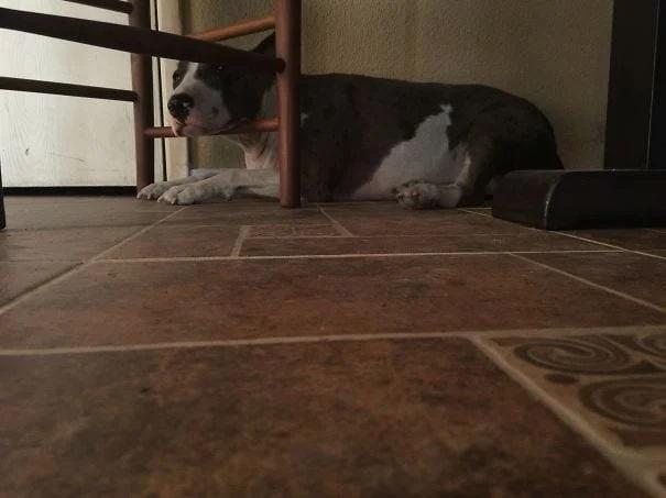 pies w tarapatach