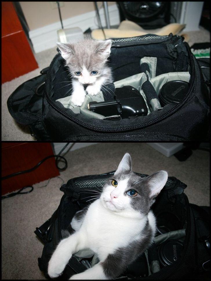 kot na przestrzeni lat