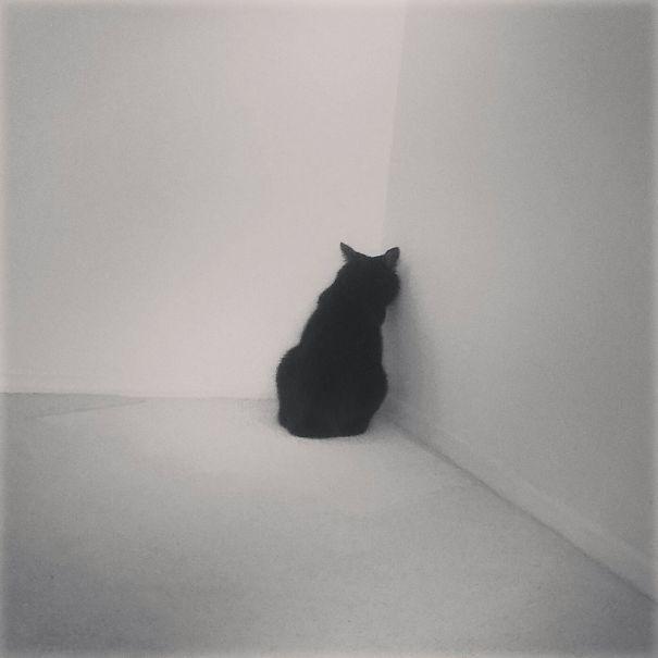 kot w rogu