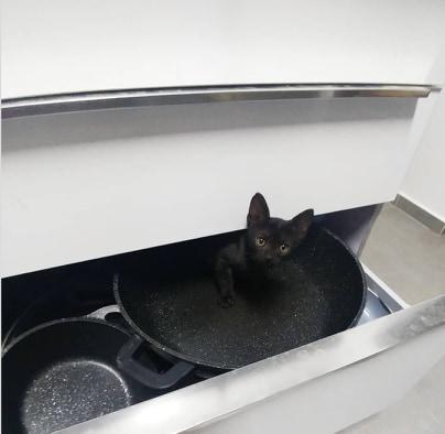 kot w szufladzie