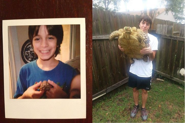 żółw po latach