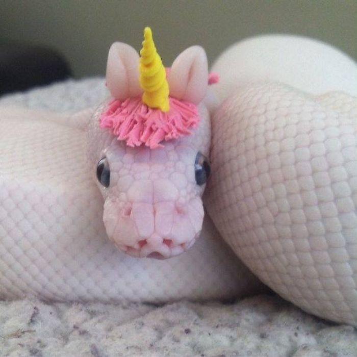 wąż z rogiem