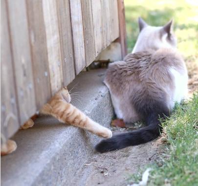 kot tyłem