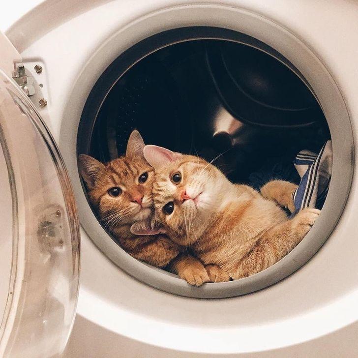 koty w pralce