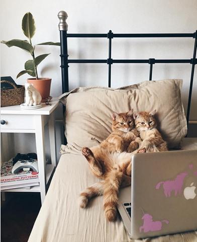 koty na łóżku