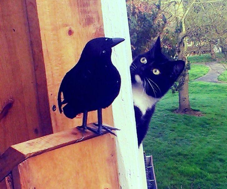 kot i sztuczny kruk
