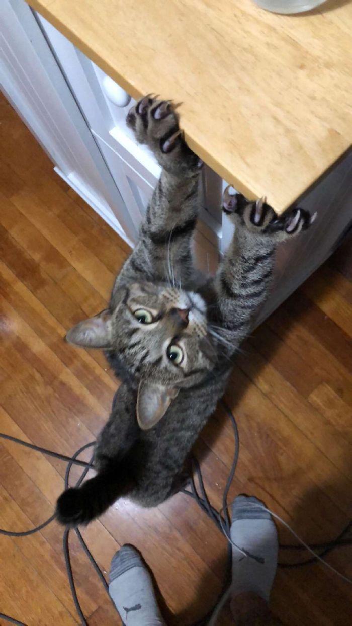 kot się przeciąga