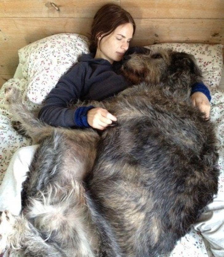 wielki pies