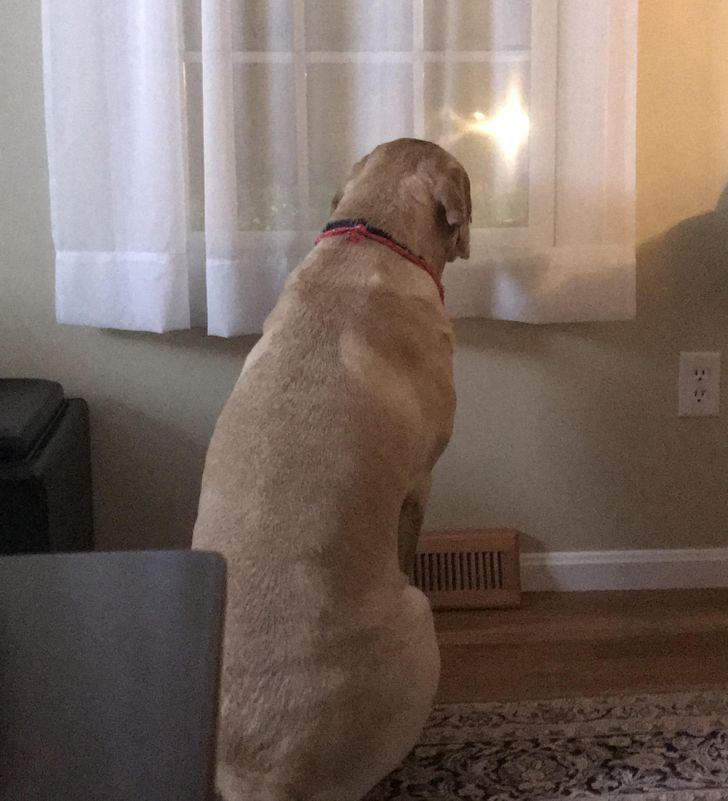 pies czeka