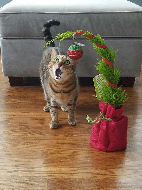 kot i roślina